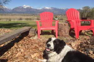 Wilderness Spirit Cabins - dogs allowed